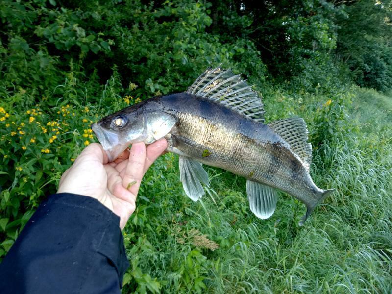 Прибывает вода и рыба перестает клевать
