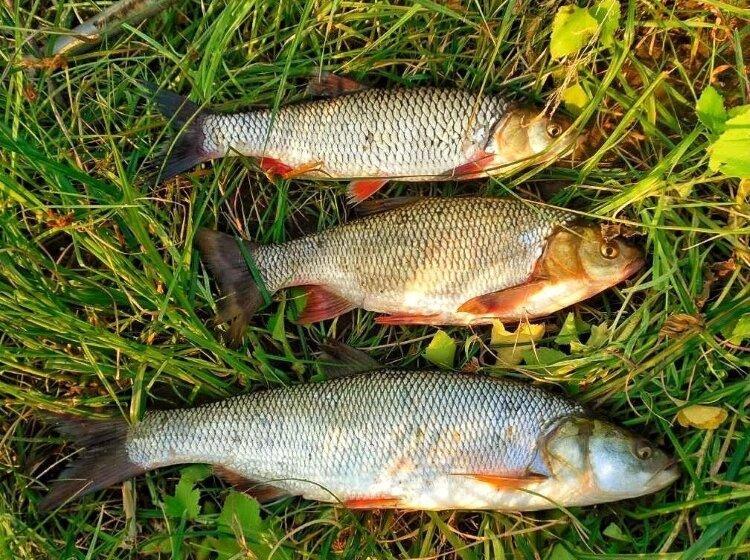 Речные рыбы, которых жарить не нужно. Да, ловить их очень интересно, просто кайф, но есть их, особенно жаренными, невозможно