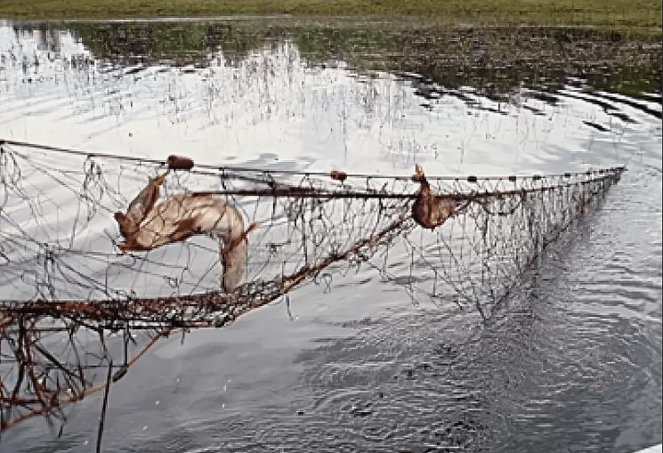 Увидел, как браконьеры ставят сети во время нереста, позвонил в рыбнадзор. Рассказываю, что они мне ответили.