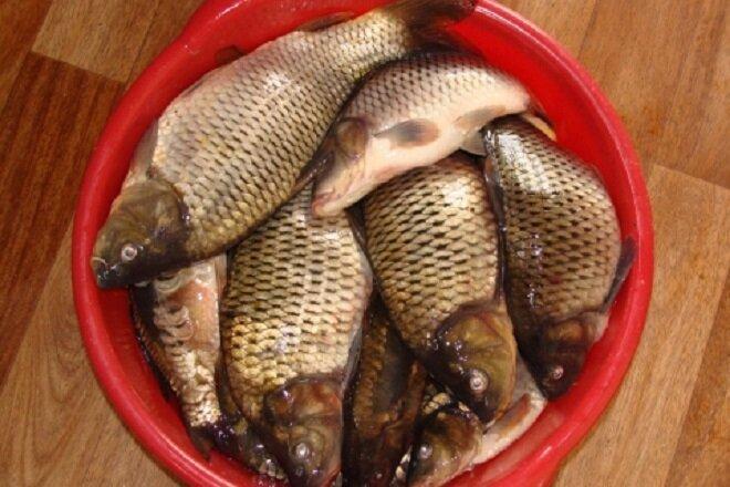 Халва + манка = одна из лучших рыбацких приманок