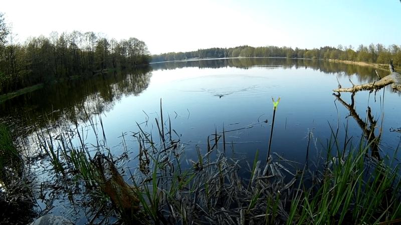 Ловля крупной плотвы: где её искать и на какие снасти ловить