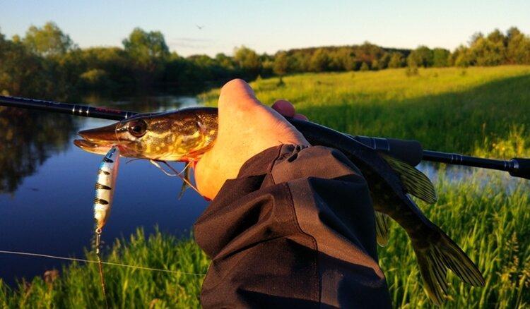 На чем рыболов растет как рыболов: на много мелких щурят или на мало больших щук
