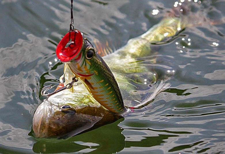 На что поймать хищную рыбу в заросшем водоёме