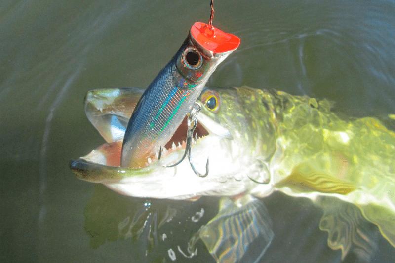 На что следует ловить щуку в заросших водоёмах