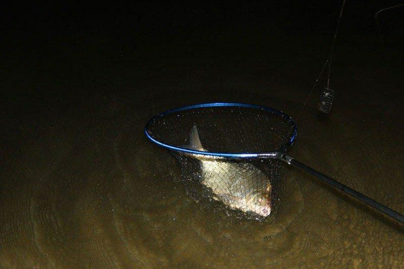 Пять рабочих способов отсечь мелочь и ловить только крупную рыбу