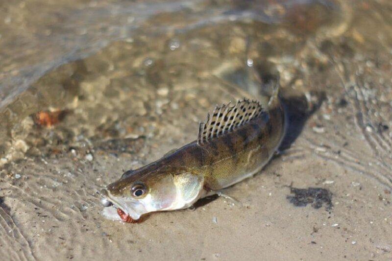 Сегодня купить рыбу дешевле, чем сходить на рыбалку