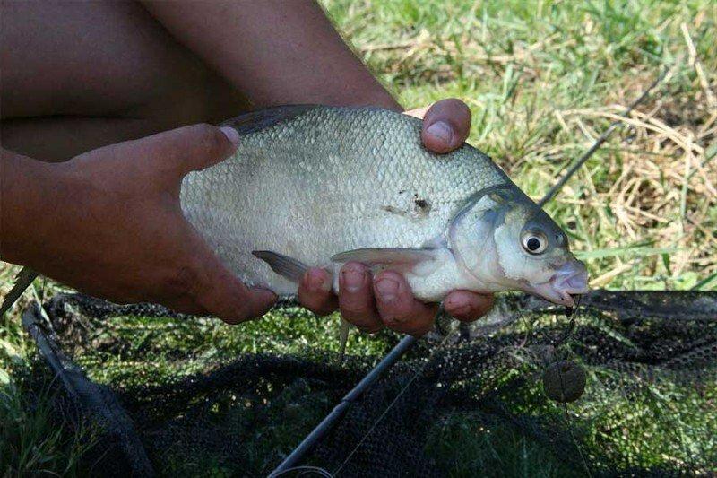Шесть критических ошибок рыболовов, которые мешают ловить рыбу на удочку