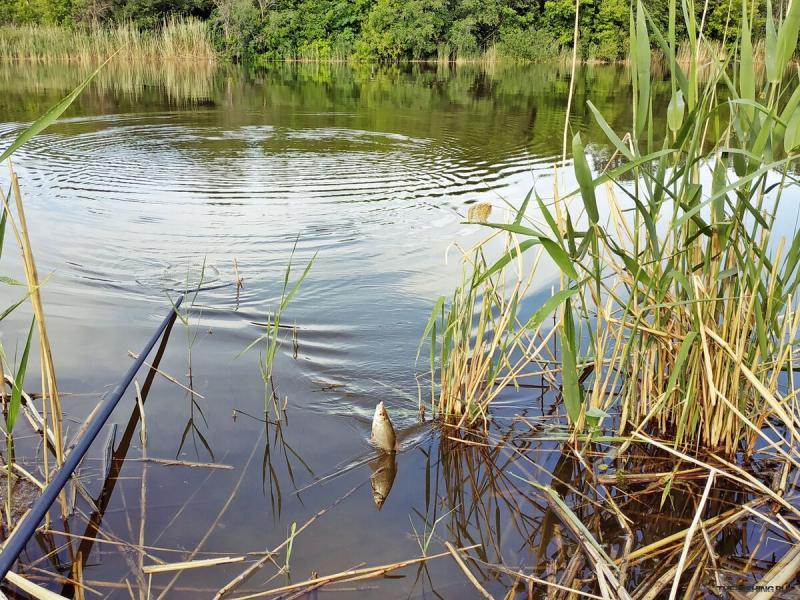 Сырная перловка - замечательная насадка для рыбалки, на которую отлично ловится рыба: лещ, плотва, карась и т.д.
