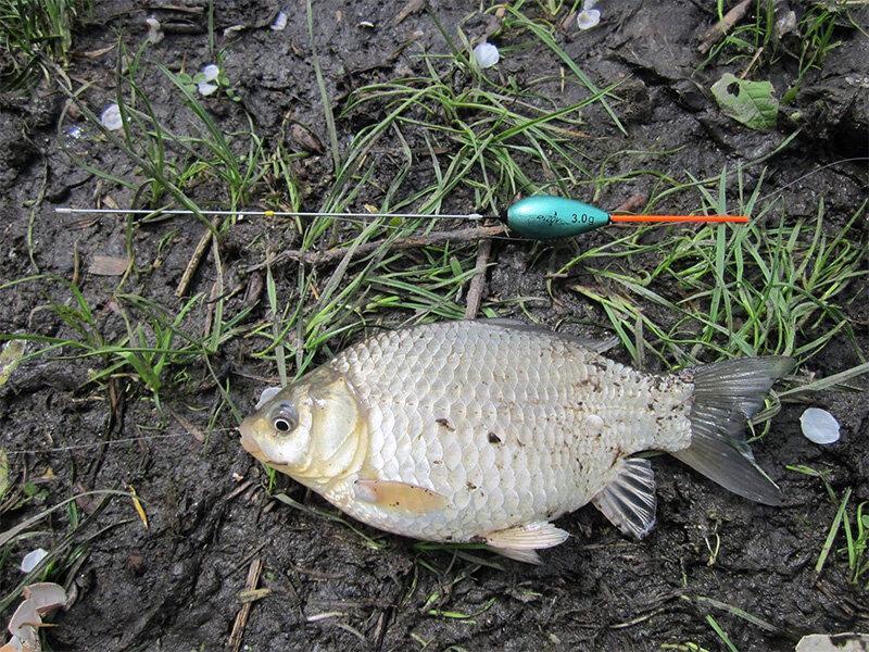 Типичная ошибка рыбака, мешающая ловить крупную рыбу