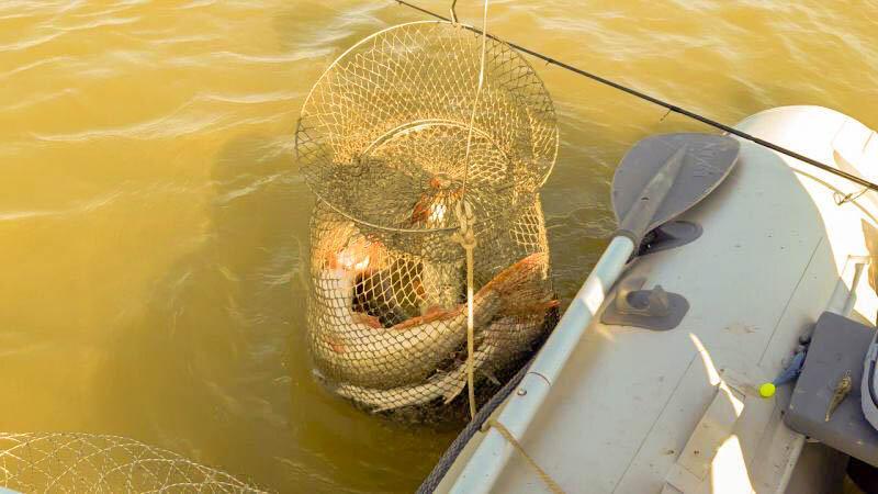 3 лучших способа, сохранить рыбу на летней рыбалке