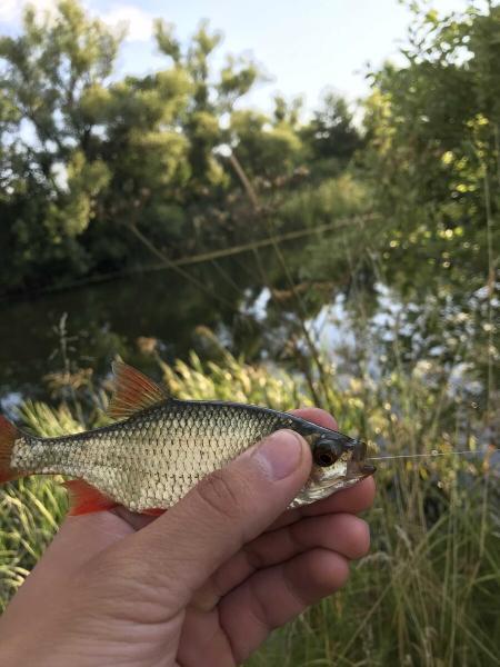 Ловля поплавочными удочками. Эффективные способы ловли. Часть 2