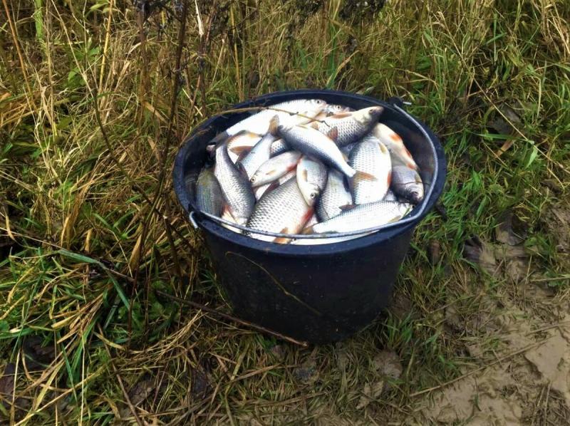 Недавно узнал какую прикормку лучше не применять осенью - она отпугивает рыбу, а большинство рыбаков её используют