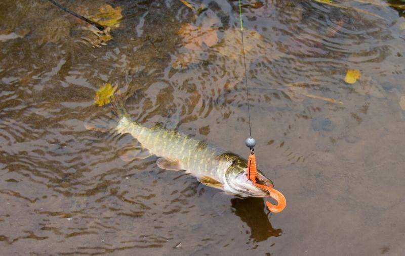Первые осенние холода - залог успешной рыбалки на щуку
