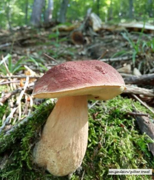 Поехал за грибами на велосипеде, улов порадовал, остался доволен путешествием. Показываю фото что насобирал