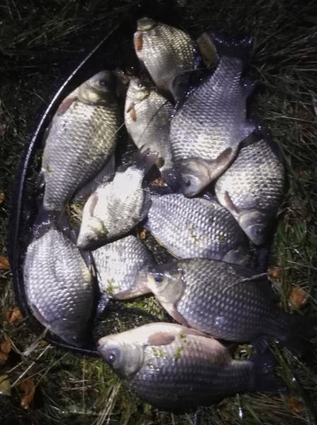 Рыбалка на карася. Конец сентября.