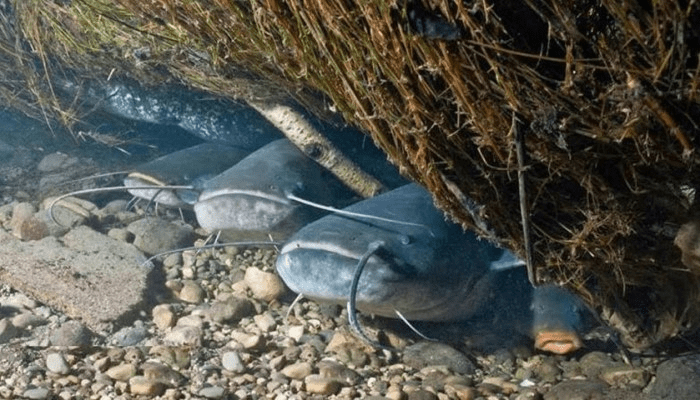 Рыбалка на сома. Кратко разберем тонкости ловли сома.