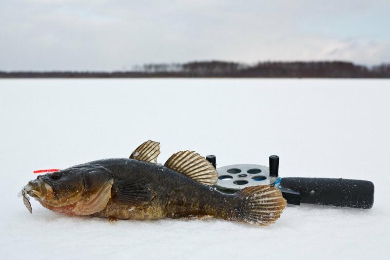 Удовольствие для рыболова поймать ротана в зимний период