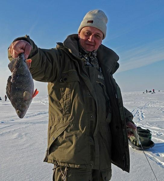 20 правил ловли окуня на зимнюю блесну