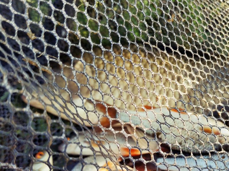 Хитрая ли рыба карась? Или глупая? Попробуем разобраться в этом