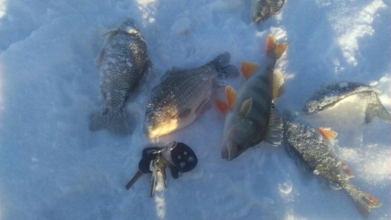 Хороший зимний улов