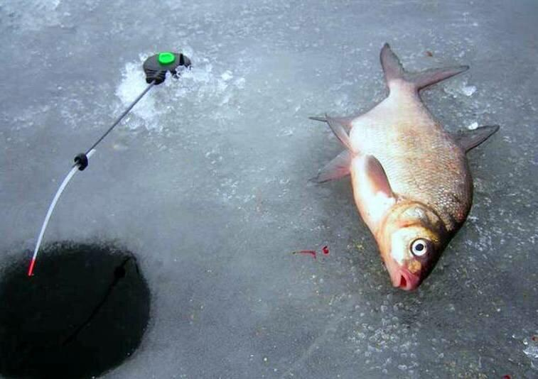 Ловля леща по первому льду. Полезная информация начинающим рыболовам