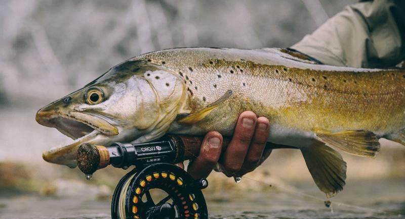 Ловля нахлыстом. Что это такое и какая рыба ловится нахлыстом