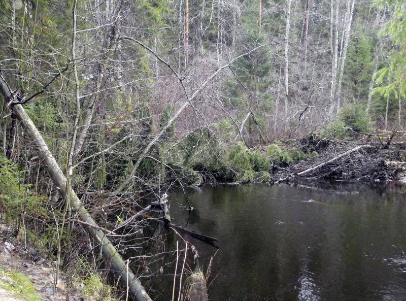 Непростой подход к осенней ловле налима