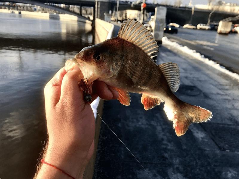 Ошибка рыболова - ловить без флюрокарбонового поводка.