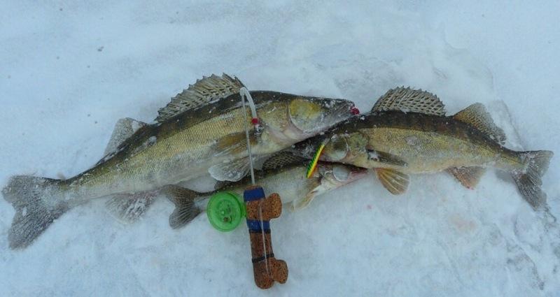 5 простых проводок при зимней рыбалке на балансир. Что нужно знать новичку