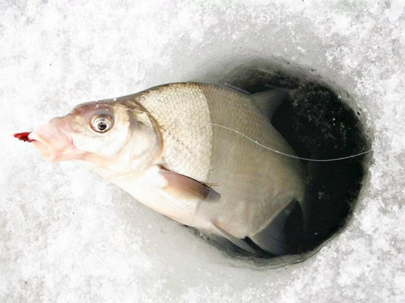 Делюсь двумя способами, которые помогут удержать рыбу под лункой на всю рыбалку