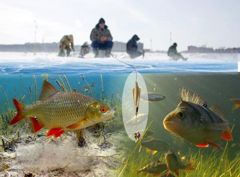 Как ловить хищника и белую рыбу на блесну одновременно. Техника и блесна хитрых буржуев.