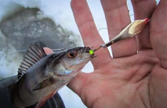 Как обловить конкурентов в условиях рыболовного прессинга по первому льду