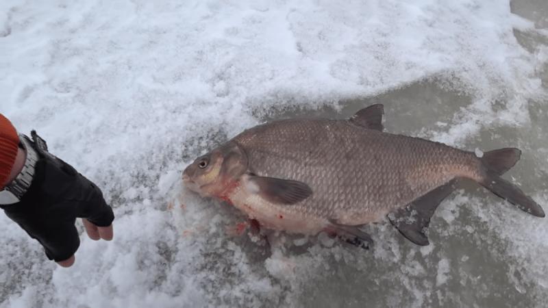 Как поймать крупного леща зимой: поиск и выбор места, на что и как правильно ловить