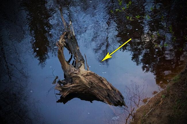 Как простая коряга на рыбалке может повысить клёв и активность рыбы в 2-3 раза?