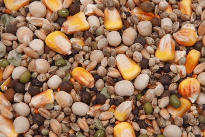 Какую прикормку использовать для ловли карпа в конце осени — начале зимы