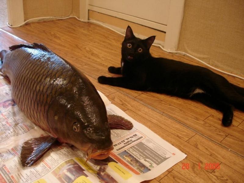 Купил рыбу, возвращаясь с «рыбалки», а продавец сдала жене