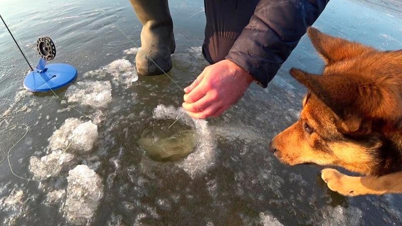 Толщина льда, которая безопасна для выхода. Рыболову на заметку.