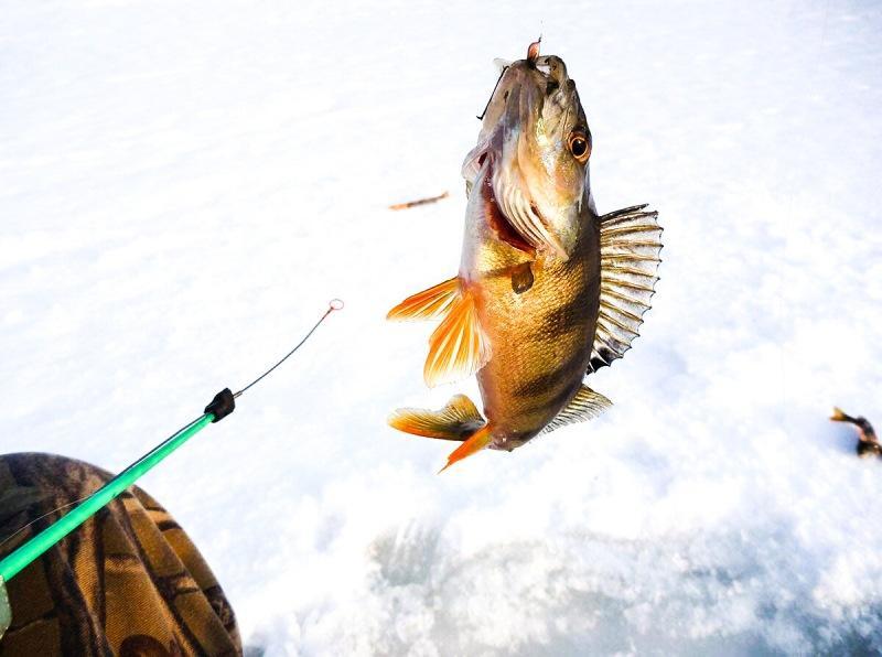 3 наживки, на которые рыба в декабре клюёт сразу (беру их на каждую рыбалку)