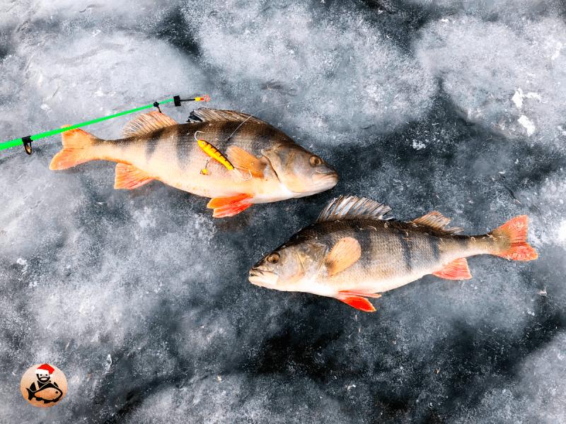 5 самых уловистых снастей, на которые я больше всего поймал окуня со льда