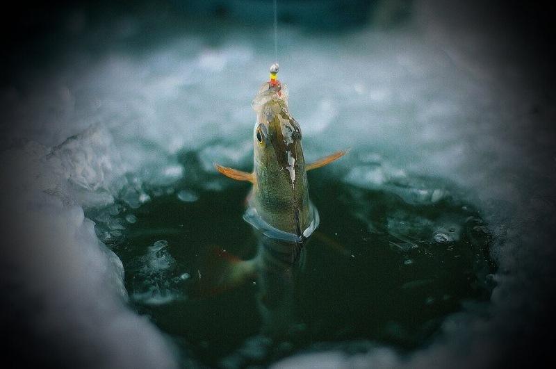 Дед-рыбак показал свою доработанную мормышку, которую окунь берёт с первого заброса в лунку