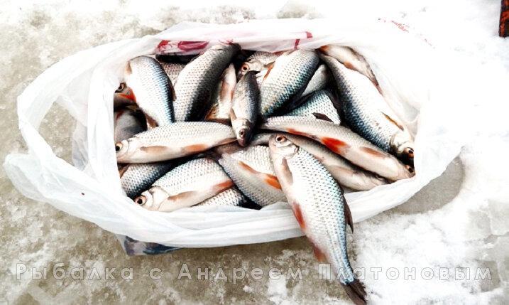Егерь подсказал добавку, от которой рыба зимой клюёт активнее в два раза (до этого о ней не знал)