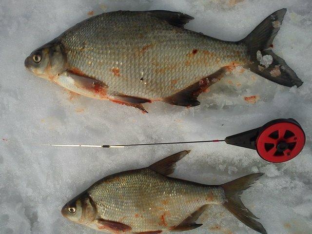Интервью с рыбаком. Безмотылка - король зимней рыбалки!