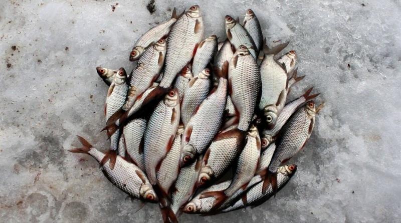 Как ловить плотву в декабре. Полведра за полдня. 5 важных советов