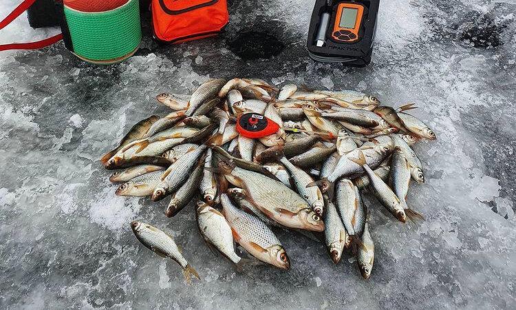 Как приманить рыбу к лунке — все друзья благодарны за этот совет.