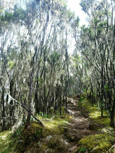 Килиманджаро. Фитнес по-африкански. Прогулка по сказочному лесу.
