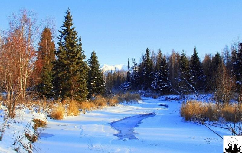 Клюёт ли карась зимой или это всё выдумки?