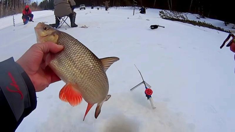 Ловля язя зимой. Чтобы поймать много язей, нужно знать, как её прикормить и на какие приманки и насадки эта рыба может клевать
