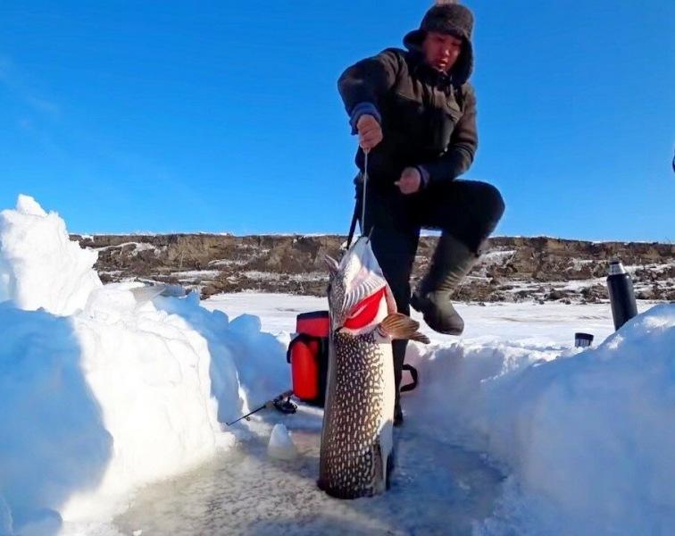 Ловля щуки зимой: разберем основные моменты, которые помогут поймать хищницу