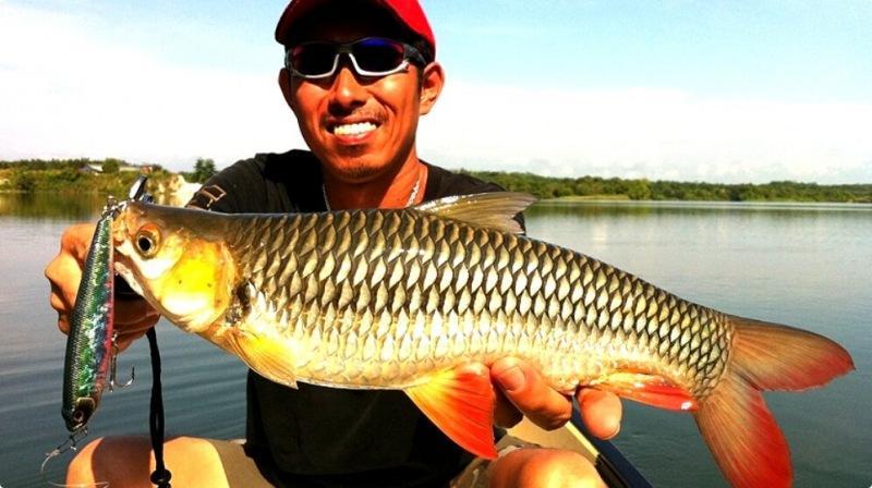 Показал рыбу друзьям рыбакам - никто не смог её правильно назвать... И это не голавль
