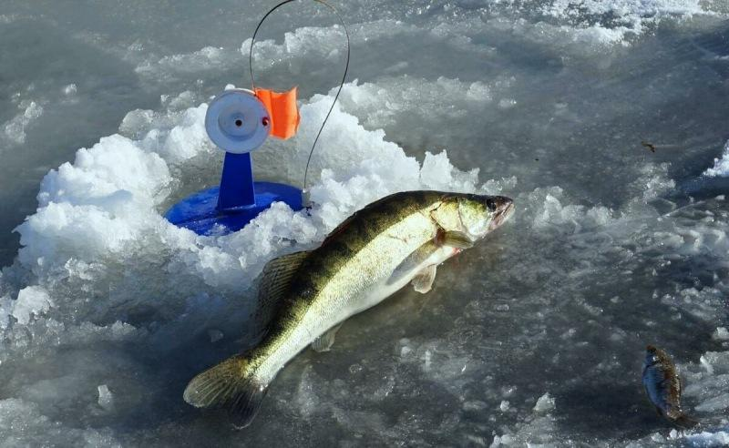 Рассказываю новичкам, как ловить судака на жерлицы со льда